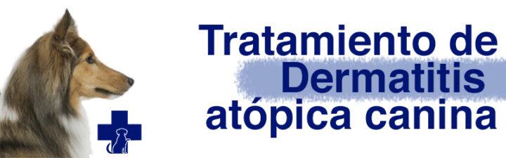 Manejo de infecciones de piel: Dermatitis atópica canina