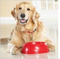 Perro adulto clínica veterinaria
